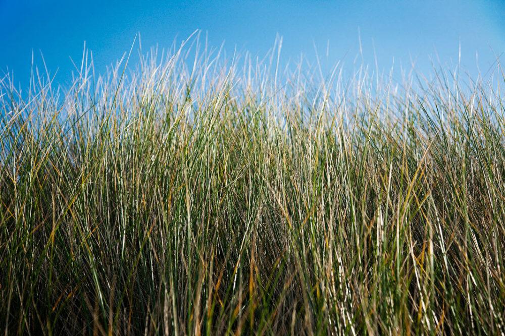 PaulMcGuckin-800 Donegal Beach Grass