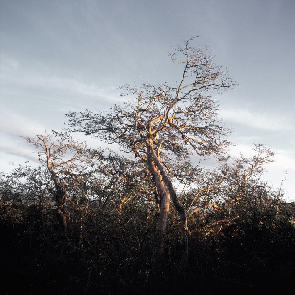 PaulMcGuckin-100 Monkeys Tree