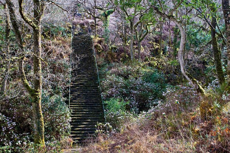 PaulMcGuckin-Glenveagh 67 Steps