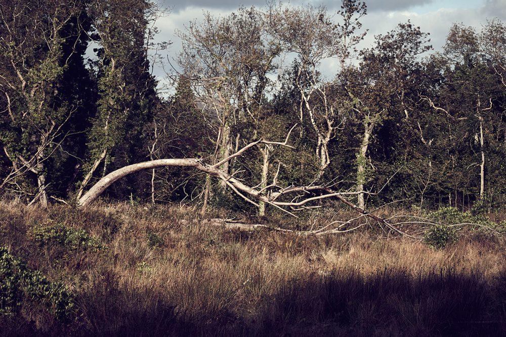 PaulMcGuckin-Ards Tree